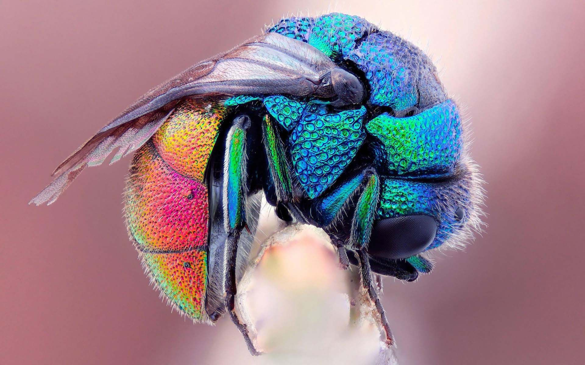 10 Most Beautiful and Colorful Insects in Nature - Wow Amazing