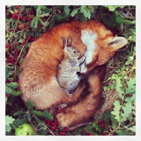 You never know when the fox's friendship will come in handy...