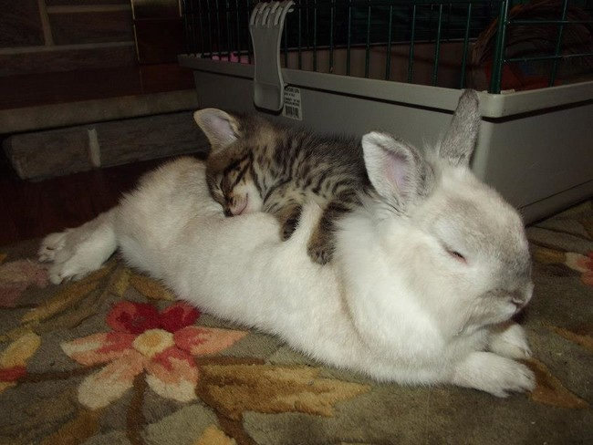 I wish I could sleep on a soft bunny like this.