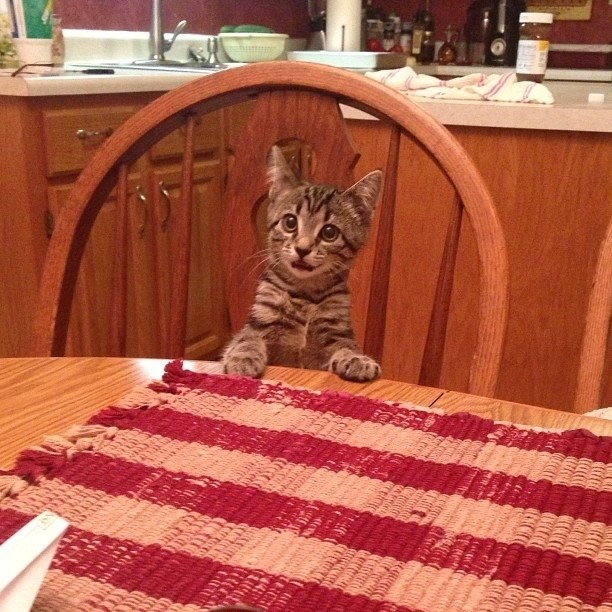 """You didn't tell me we were having steak! I would have fasted all day!"""