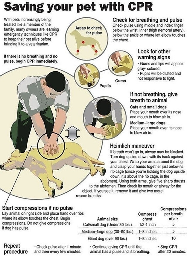 Know CPR for dogs.