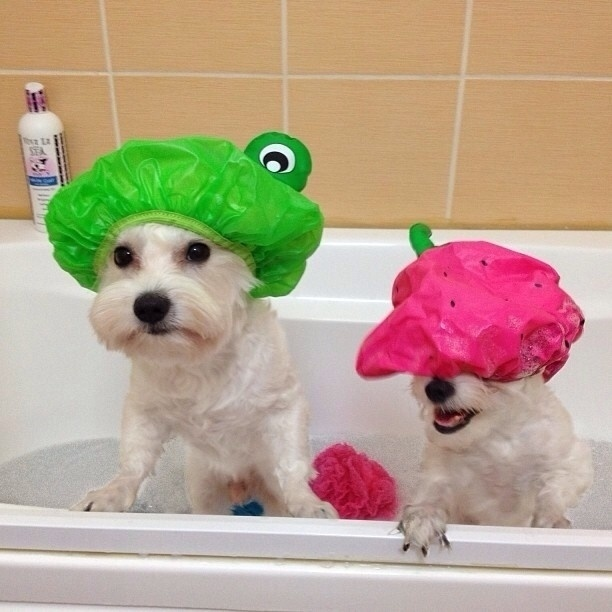 Use shower caps while in the bathtub to prevent water and soap from getting into their ears or eyes.