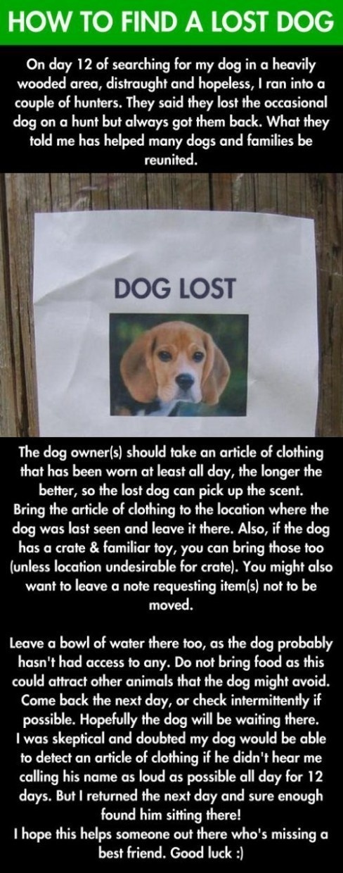 Use this tip if your dog ever gets lost.