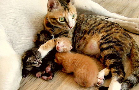 kittens and mother