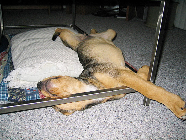 Nande Used To Love Sleeping Under The Coffee Table Until She Could No Longer Fit