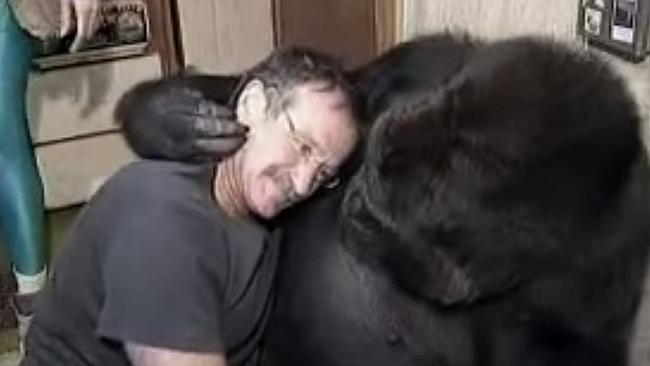 Good mates ... Koko the gorilla and Robin Williams in 2001 when they met.