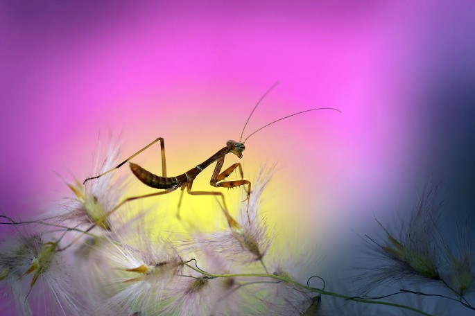Garden Insects 27