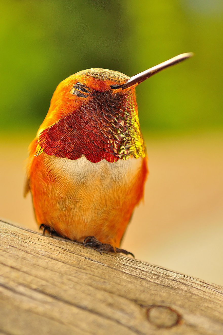 cute-beautiful-hummingbird-photography-14