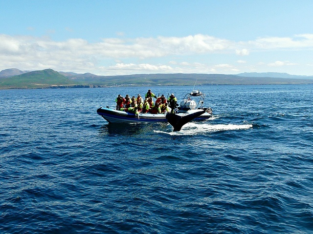 http://resources.touropia.com/gfx/d/best-whale-watching-tours/iceland.jpg