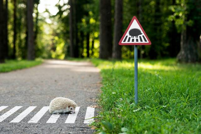 Tiny Road Signs Erected to Remind City Residents Animals Live There Too by clinic 212  (3)