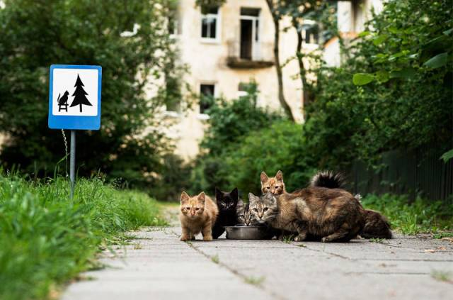 Tiny Road Signs Erected to Remind City Residents Animals Live There Too by clinic 212  (6)