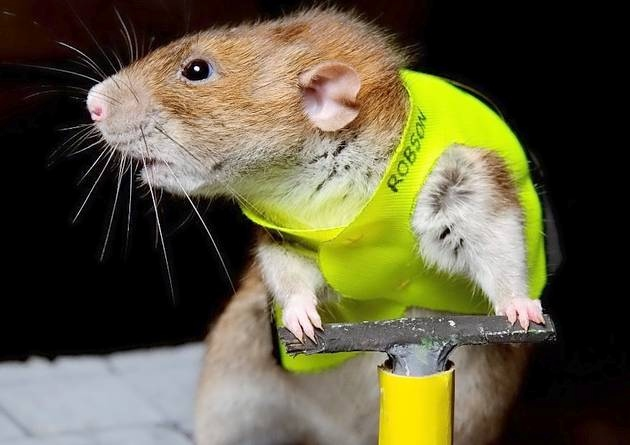 Image result for animal construction worker