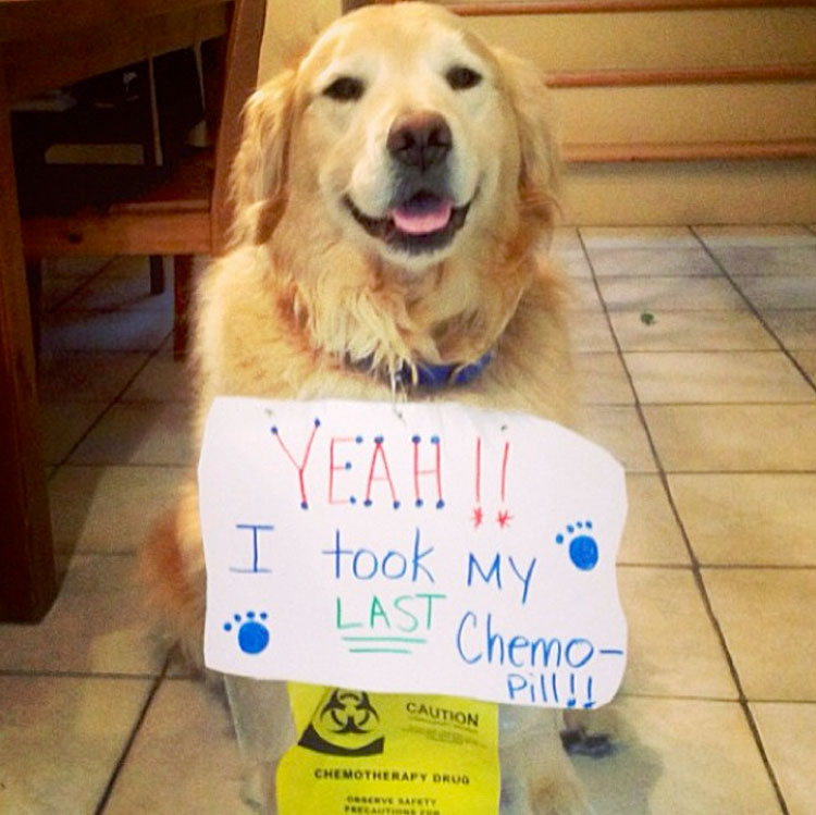 18-Inspiring-Dogs-Who-Survived-Cancer