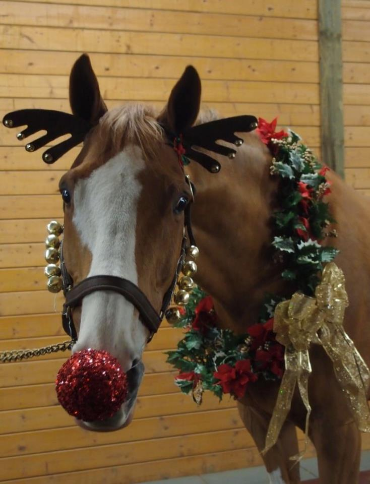 Rudolph, The Red-Nosed Reindeer - Horse Halloween Costumes Are So Brilliantly Funny €�You Might Want