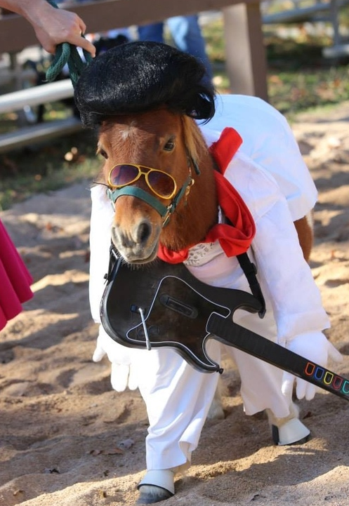 Horse Halloween Costumes Are So Brilliantly Funny You