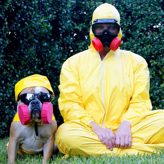 cosplay-breaking-bad-dog-costume-01