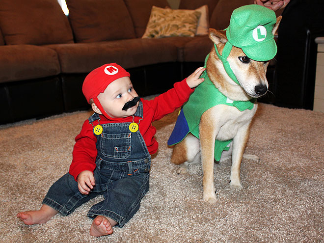 Image result for dogs dressed as luigi