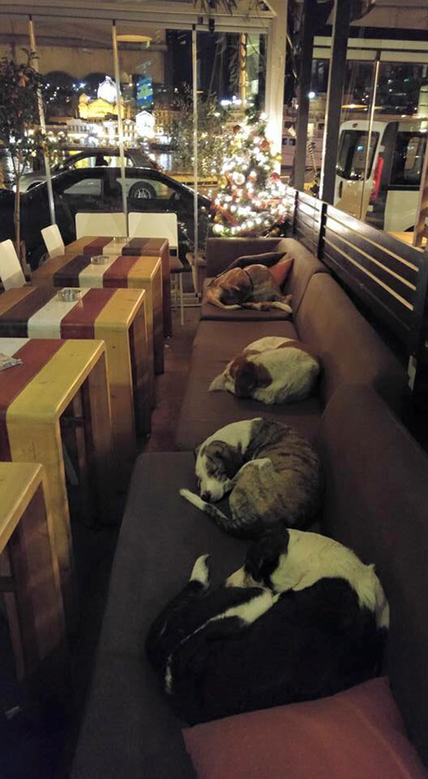 stray-dogs-sleep-cafe-hot-spot-lesbos-greece-1