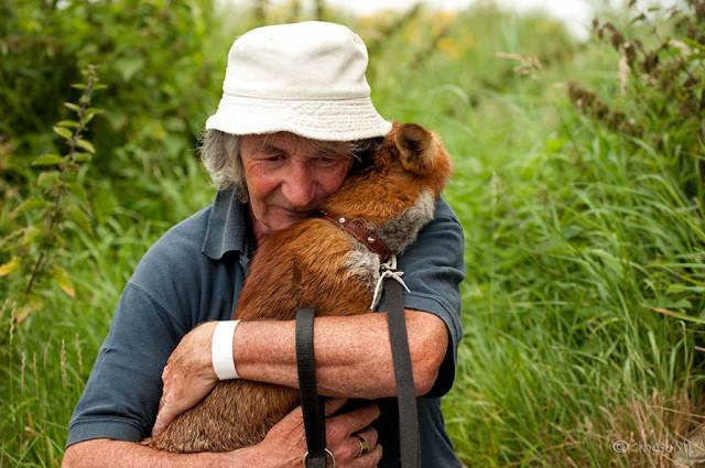 pet-foxes-rescue-patsy-gibbons-ireland-20