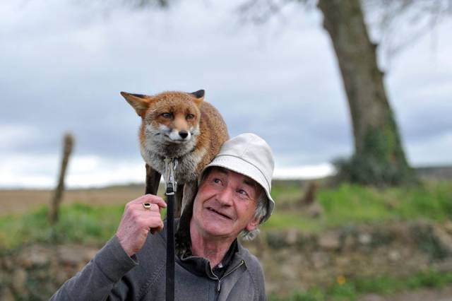pet-foxes-rescue-patsy-gibbons-ireland-5