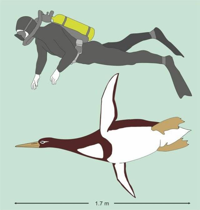 Human-Sized Penguin