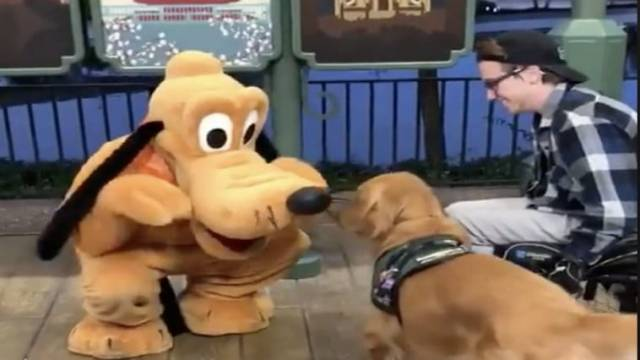 Service Dog Meets Pluto