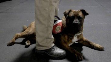 Abandoned Shelter Dogs Become Service Animals