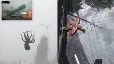 Sea Creatures Rain over Chinese City
