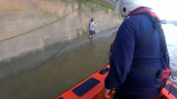 Dog Falls Into The River Thames