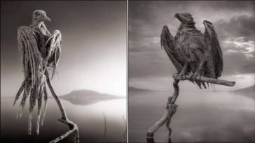 Lake Natron Petrifies Animals